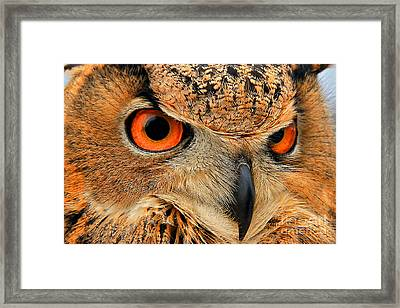 Eagle Owl Framed Print by Leslie Kirk