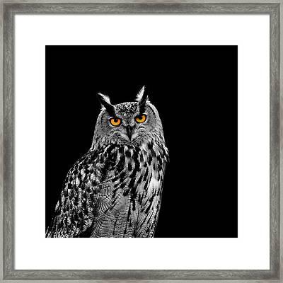 Eagle Owl Framed Print by Mark Rogan