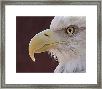 Eagle Portrait Freehand Framed Print