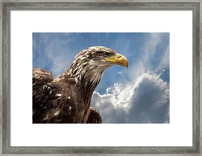 Eagle Portrait Framed Print