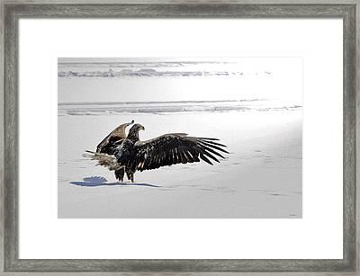 Eagle Prayer Framed Print by RJ Martens