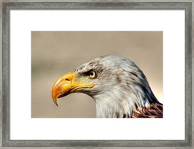 Eagle Profile Framed Print
