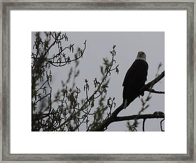 Eagle Series Framed Print