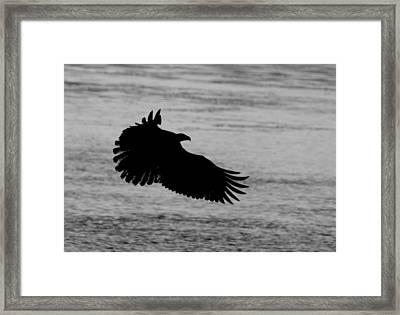 Eagle Silhouette Framed Print
