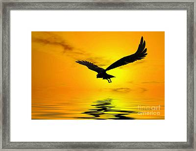 Eagle Sunset Framed Print by John Edwards