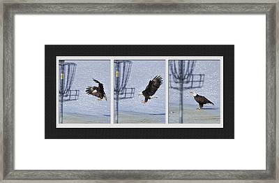 Framed Print featuring the photograph Eagle Triptych by Rob Graham