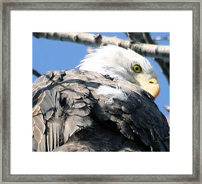 Eagle Framed Print by Valerie Wolf