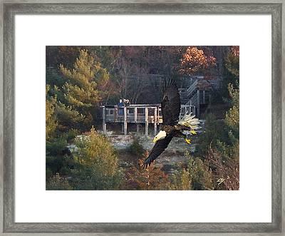 Eagle Watch Framed Print