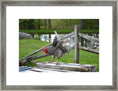 Eagle With A Red Chapeau Framed Print