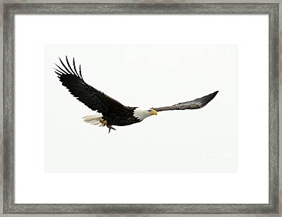 Eagle With Fish Framed Print