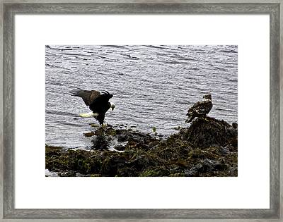 Framed Print featuring the photograph Eagle7 by Timothy Latta