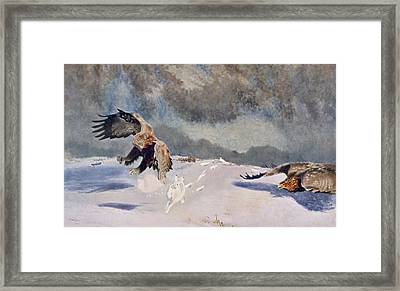 Eagles And Rabbit, 1922 Framed Print by Bruno Andreas Liljefors