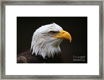 Bald Eagle Profile Framed Print