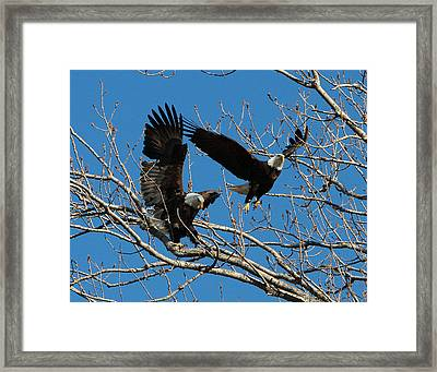 Framed Print featuring the photograph Eagles by John Freidenberg