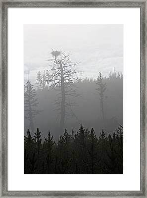 Eagle's Nest In Fog Framed Print