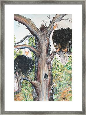 Eagles On A Tree Framed Print