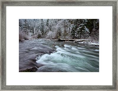 Eagles Winter Framed Print