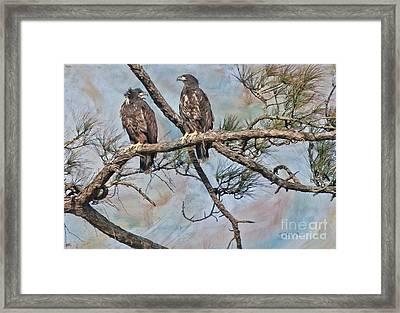 Eaglets In Oil Framed Print