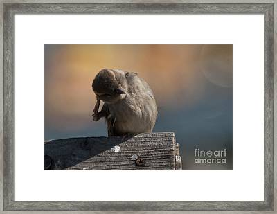 Ear Wax Framed Print by Rod Wiens