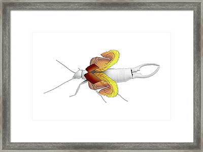 Ear-wig Wing Folding Framed Print