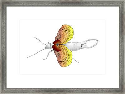 Ear-wig Wings Framed Print
