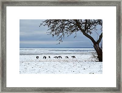Framed Print featuring the photograph Early Arrival by Kennerth and Birgitta Kullman