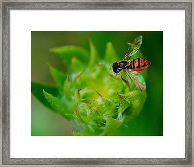 Early Arrival Framed Print by Frozen in Time Fine Art Photography