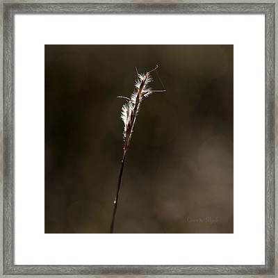 Framed Print featuring the photograph Early Autumn by Karen Slagle