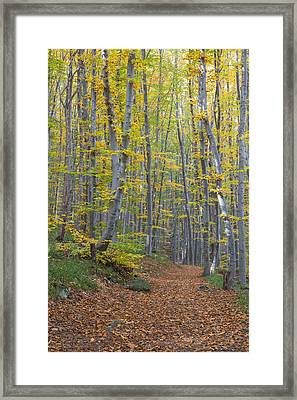 Framed Print featuring the photograph Early Autumn Vitosha Mountain Forest Bulgaria by Jivko Nakev