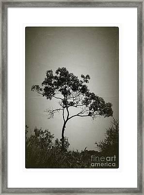 Early Bloomer - No.4838v Framed Print