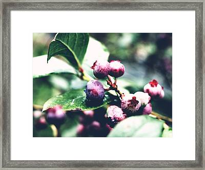 Framed Print featuring the photograph Early Blueberries by Rachel Mirror