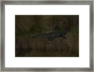 Early Evening Ambush Framed Print by Frank Feliciano