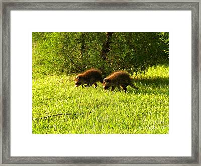 Early Evening Explorers Framed Print