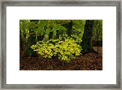 Early Fall In Bidwell Park Framed Print by Robert Woodward