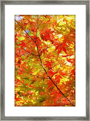 Early Fall Framed Print