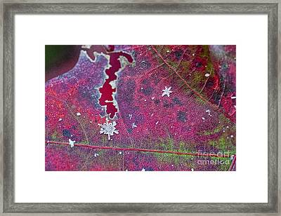 Early Fall Snow Flakes Framed Print by Dan Friend