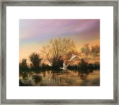 Early Flight Framed Print by Tom Shropshire