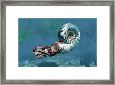 Early Jurassic Ammonite Framed Print