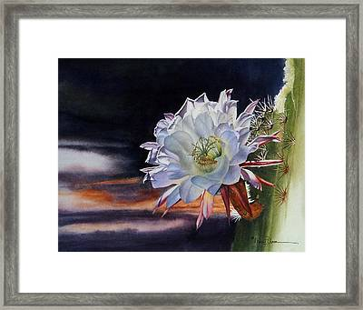 Early Morning Argentine Giant Cactus Flower Framed Print