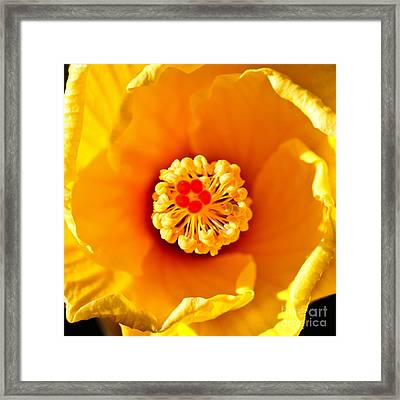 Early Morning Beauty - Square Framed Print