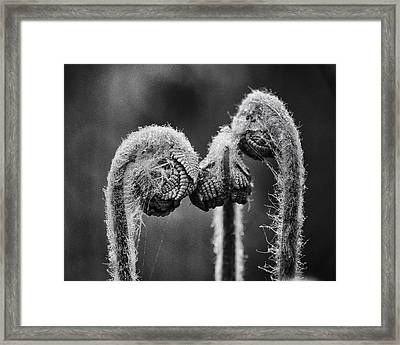 Early Morning Conference Framed Print
