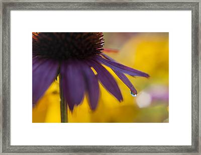 Early Morning Dew Drops Framed Print