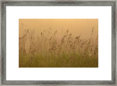 Early Morning Field Framed Print