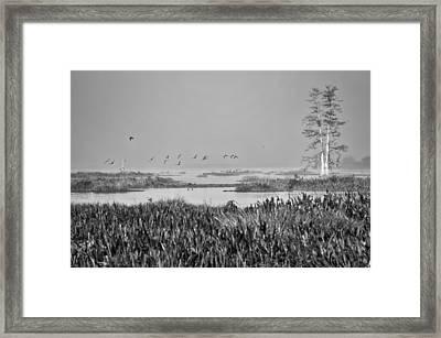 Early Morning Flight Framed Print by Carolyn Marshall