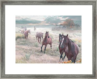 Early Morning Fog Framed Print by Bill Stephens