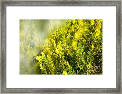 Early Morning Fog Framed Print by Lena Wilhite