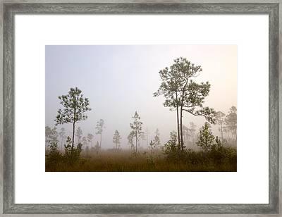 Early Morning Fog Framed Print by Rudy Umans