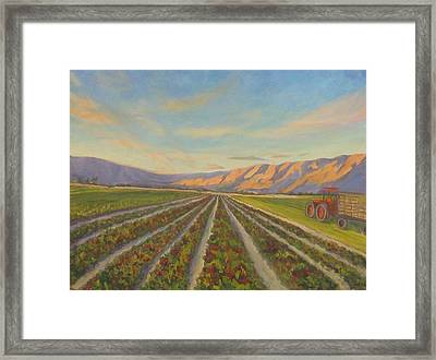 Early Morning Harvest Framed Print by Maria Hunt