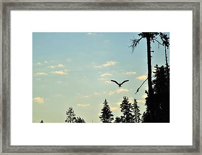 Early Morning Heron In Silhouette Framed Print by Rich Rauenzahn