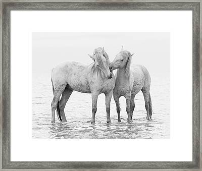 Early Morning Horse Play Framed Print